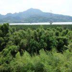 台北から電車でマングローブの森へ&八里の渡し船